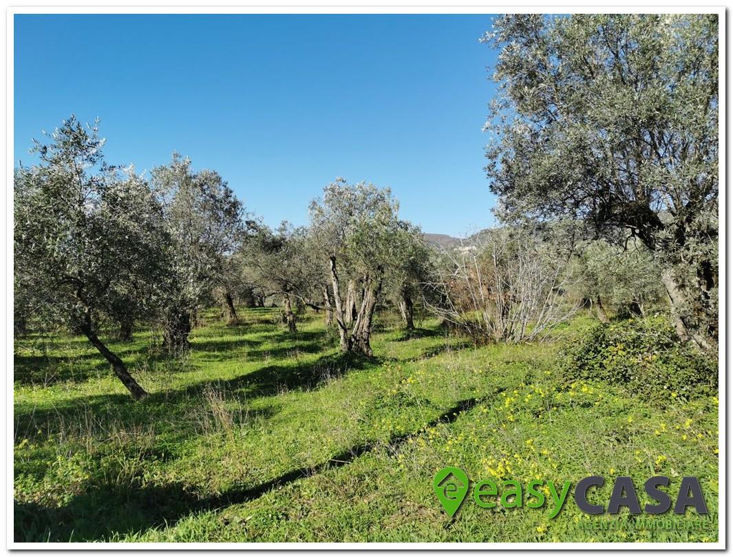 Terreno agricolo a Montecorvino Rovella (SA)