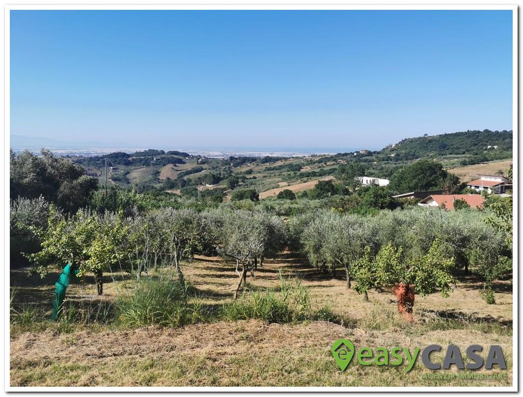 Terreno agricolo panoramico a Montecorvino Pugliano (SA)